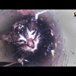 Kitten Meowing For Help From 40 Feet Down A Skinny Pipe | The Dodo