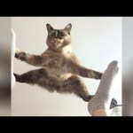 It's TIME for SUPER LAUGH! – Best FUNNY CAT videos
