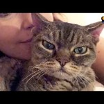 Aggressive Cat Shocks Mom By Becoming A Snugglebug – BARBARA | The Dodo
