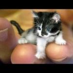 おかしい猫 – かわいい猫 – おもしろ猫動画 HD #248