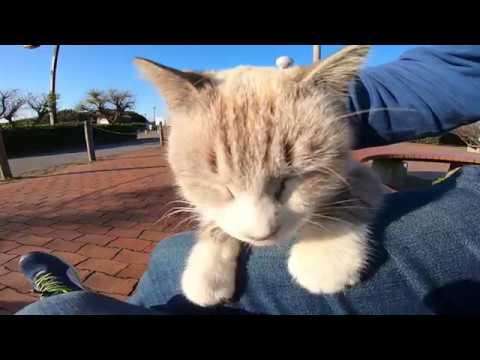 公園のベンチに座っていたら野良猫がトコトコモフられにやってきた