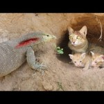 Primitive Technology: Boys Found Five Cats From Komodo Dragon Attack – Komodo Dragon Stalks Cat Home