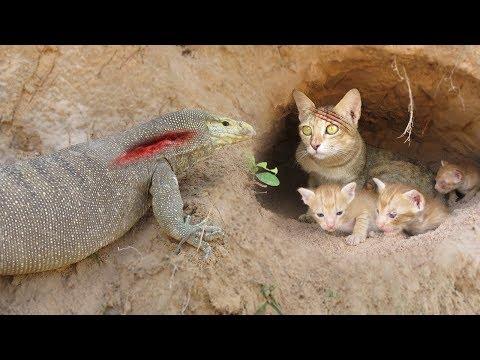 Primitive Technology: Boys Found Five Cats From Komodo Dragon Attack – Komodo Dragon Stalks Cat Home