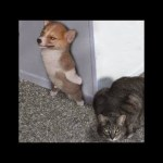 「6秒で笑える」最高におもしろい犬, 猫のハプニング, 失敗動画集・かわいい犬, かわいい猫