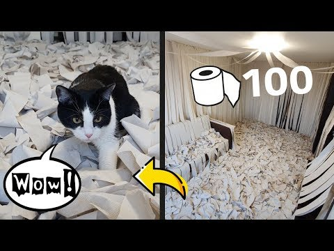 We Made a Room of Toilet Paper. The Cat Has Gone Mad!