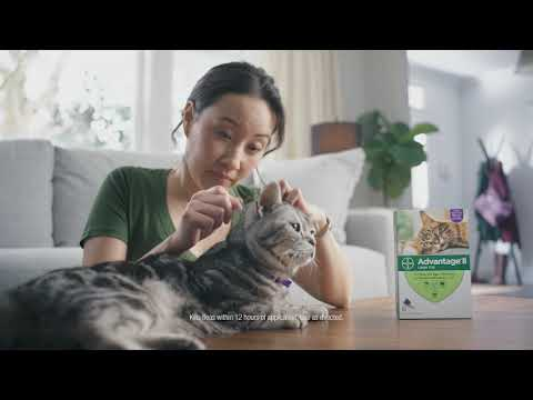 Fleas Can Attempt To Tag Along With You And Your Cat | Advantage® II :15