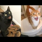 7 Sounds Cats Make and What They Mean