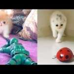 Cat Reaction to Playing Toy – Funny Cat Toy Reaction Compilation