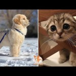 💗Aww – Cute Dog and Cat Compilation 2019💗 #7 – CuteVN