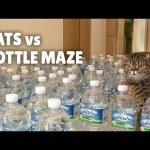 Cats vs Bottle Maze