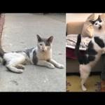 Street Cat Rescue: Winston