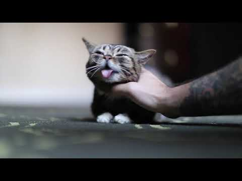 Farewell Lil BUB: In Loving Memory of the Most Amazing Cat On the Planet
