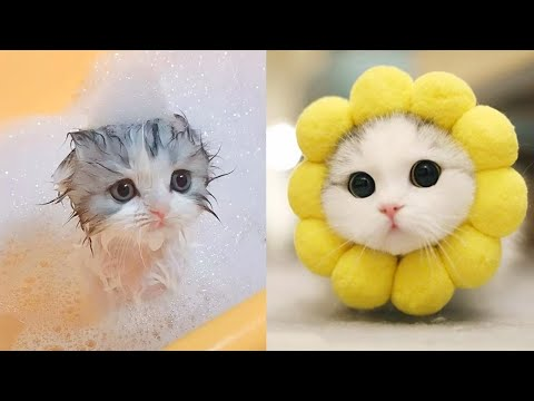 Baby Cats – Cute and Funny Cat Videos Compilation #9 | Aww Animals