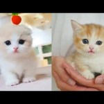 Baby Cats – Cute and Funny Cat Videos Compilation #10 | Aww Animals
