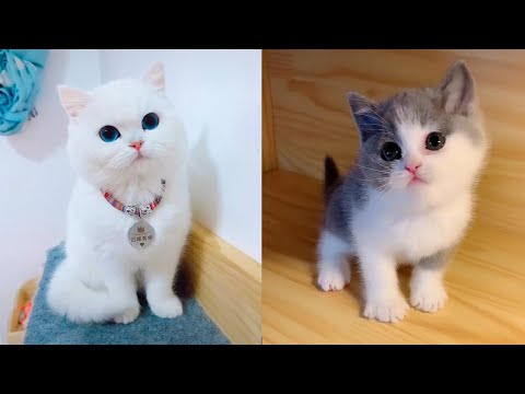 Baby Cats – Cute and Funny Cat Videos Compilation #11 | Aww Animals