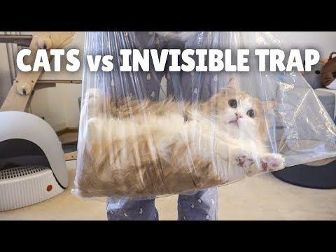 Cats vs Invisible Trap