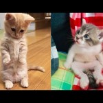 Baby Cats – Cute and Funny Cat Videos Compilation #17 | Aww Animals