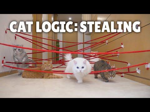 Cat Logic: Stealing
