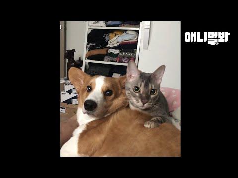 서로 영혼이 바뀐 고양이와 강아지 ㅣ Dog and Cat Switched Their Soul