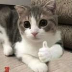 「絶対笑う」最高におもしろ 猫のハプニング, 失敗動画集・かわいい猫 #5