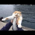堤防で虐められてた猫が幸せな生活になるまでの軌跡