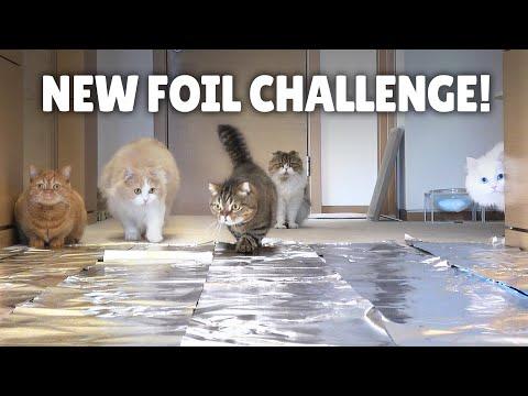 Foil Challenge! Do Cats Walk on Foil?