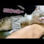 生まれて初めての地震が怖すぎて疲れ果てちゃった猫…笑