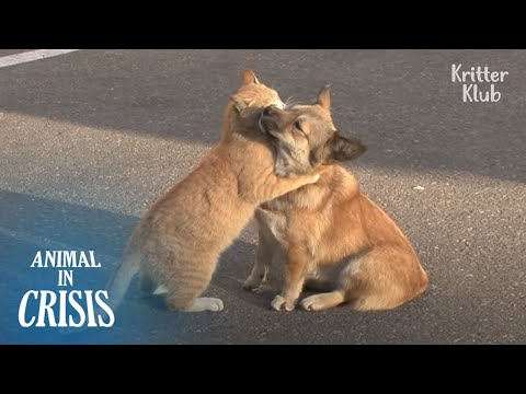 """Don't Worry, Your Family Will Find You"" Cat Comforts A Dog Who's Abandoned 
