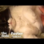 Stray Cat Gives Birth In Woman's Bathroom | The Dodo Foster Diaries
