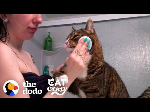 Cat Is VERY Involved In His Mom's Daily Routine | The Dodo Cat Crazy