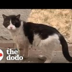 Woman Watches Her Neighbors Abandon Their Cat  | The Dodo Cat Crazy