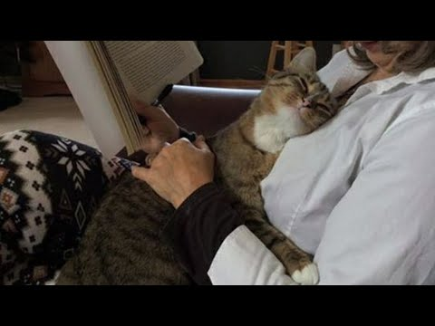Have the love of a cat is to have the world   –  Cute ways cats show their love for owner