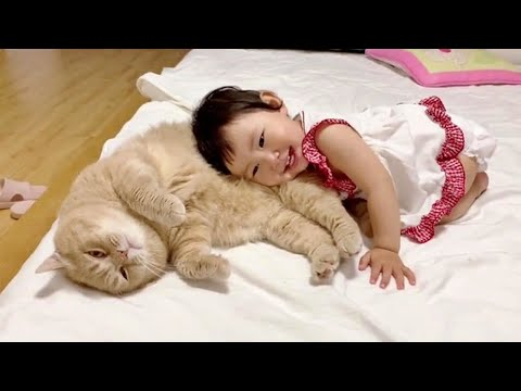 Loving Family Cat Always There For His Little Human Sister