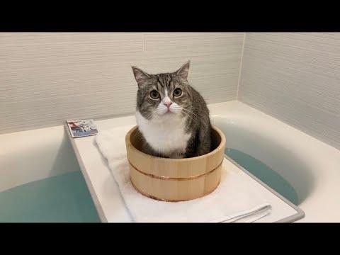 お風呂が沸くと先回りして待ってる猫がかわいすぎたw
