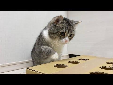 運動神経が悪い猫がモグラ叩きしたらかわいすぎたwww