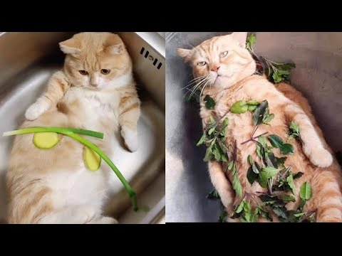 Funniest Cat Videos That Will Make You Laugh #14  | Funny Cats