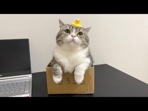 とうとうパソコンを壊して反省中の猫がこちらです…笑