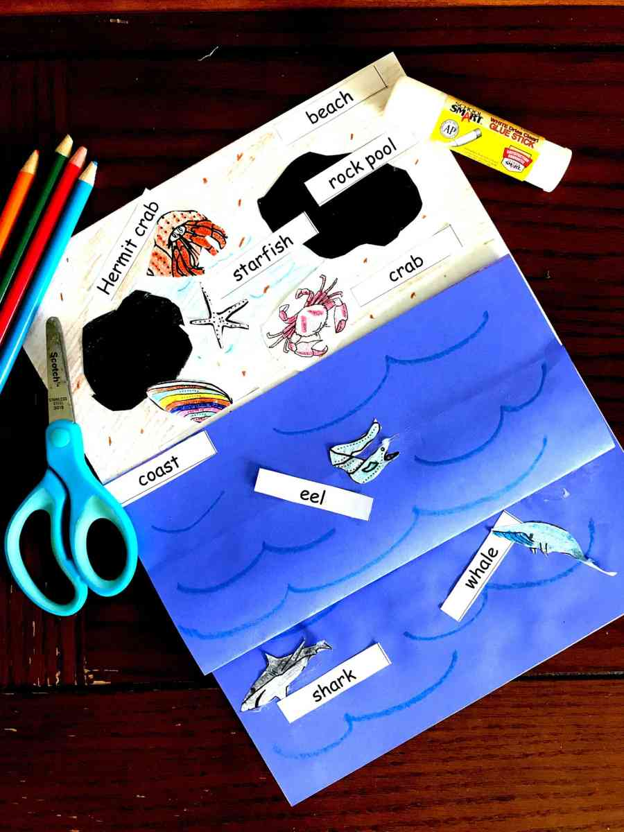 Here's A Free Tide Pool Interactive Notebook Perfect for K - 2 Grade