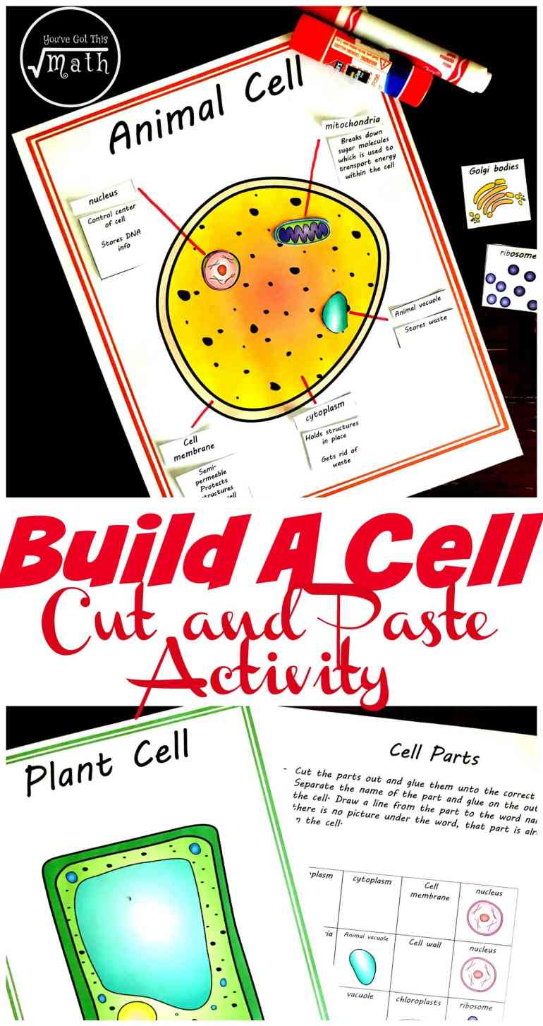 Free Cut And Paste Animal And Plant Cell Worksheet Comparing Cells