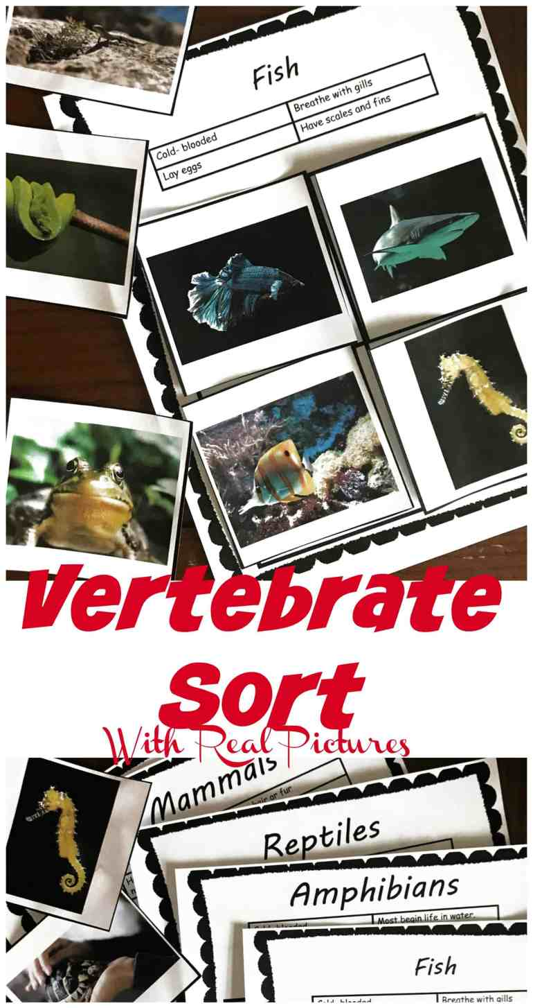 This free vertebrate activity has real-life photos of 20 animals for children to sort into five categories. The children will read the information provided for each major group, and then the children must determine if the picture is a bird, amphibian, reptile, mammal or fish.