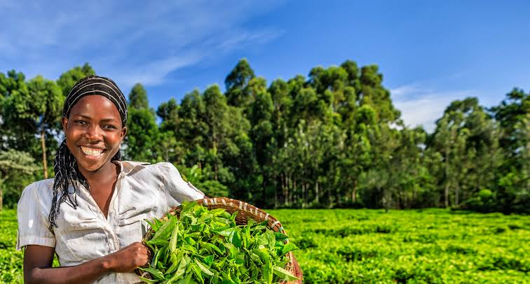 Loan for agriculture