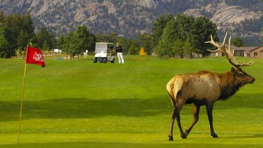 golf sahasını basan elk