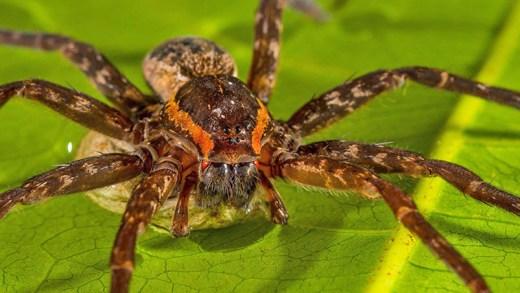 örümceğin av anı hızlı çekim