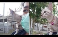 Sahibinin Omzunda Motosiklet Yolculuğu Yapan Minik Kedi