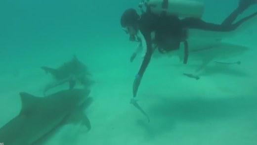 elinde tuttuğu balığı büyük balığa kaptıran dalgıç