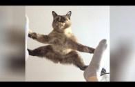 Bu Kediler Delirmiş!   Komik Kediler