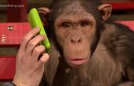 Maymunların Sihirbazlık Gösterilerine Verdikleri Tepkiler