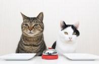 Zil ile Yemek İsteyen Kediler! Mama için Öğrenemeyecekleri Şey Yok!