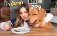 Köpeğin Görünmez Yemeğe Verdiği Reaksiyon