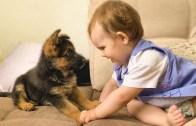 Sevimli Bebeğin Köpek Dostuyla İlk Tanışması